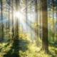 """Ecodesign 2022: apenas Recuperadores e Salamandras """"eco-friendly"""" na UE a partir de 2022"""